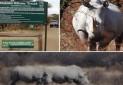 بوتسوانا، تجربه گردشگری اجتماع محور در پناهگاه حیات وحش کرگدن خاما