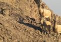 خشکسالی، بدترین شکارچی «دره انجیر»