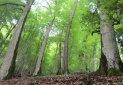 جنگل های شمال در آستانه یک نفس عمیق