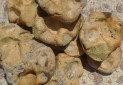 اعتراض به ثبت «نان کرنون» به نام شهر بابک