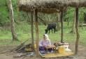 توجه به گردشگری روستایی و بوم گردی در گیلان