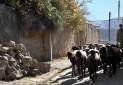 زیرساخت 36 روستای هدف گردشگری اردبیل تامین می شود