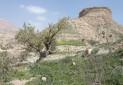 598 اثر باستانی در ایلام و كرمانشاه شناسایی شد