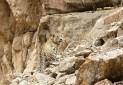 ناگفته هایی از پروژه گردنبندگذاری پلنگ شمال شرقی ایران در پارک ملی تندوره