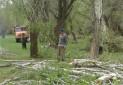 قطع درختان در روستای قراتوره بیجار گروس