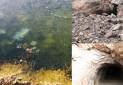 سه اثر طبیعی در میبد ثبت ملی شد