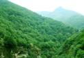 ثبت جهانی ۱۵۰ هزار هکتار از جنگل های هیرکانی
