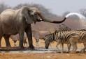 رونق گردشگری حیات وحش به شرط حفاظت