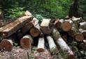 سالی چند درخت برای تهیه دفترچه های بیمه قطع می شود
