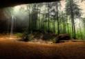 کشف ویروس های بسیار بزرگ در خاک جنگل