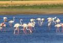 پرندگان مهاجر مهمان تالاب مهاباد شدند