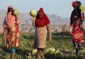 برگزاری نخستین نشست بررسی نقش تعاونی های روستایی زنان در توسعه فعالیت های صنایع دستی