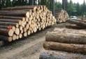 برداشت چوب از جنگل های ثبت جهانی ممنوع شد