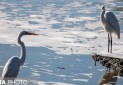 ایران زیباست؛ مهاجرت پرندگان به بندرعباس