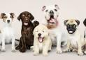 همه آنچه که باید در مورد کرونا و حیوانات خانگی بدانیم