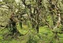 اسرار آمیزترین جنگل های جهان