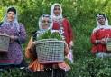 چالش های توسعه گردشگری روستایی در ایران