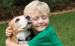 پیش نویس قانون حمایت از حیوانات خانگی در حال تدوین است