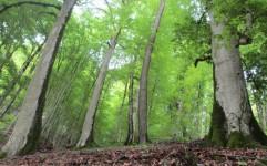 نابودی سالانه سه هزار هکتار جنگل در ایران