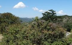 هیچ مجوز جدیدی برای بهره برداری از جنگل صادر نخواهد شد