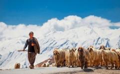 ارائه پرونده کوچ عشایر چهارمحال و بختیاری در نشست شورای ثبت میراث فرهنگی