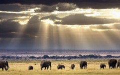 گردشگران آفریقایی در راه ایران