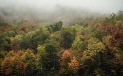 عزم جدی ایران برای ثبت جهانی جنگل های هیرکانی