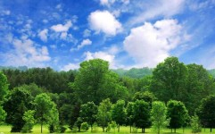 کاشت 30 هزار اصله درخت در حاشیه راه های ورامین و قرچک