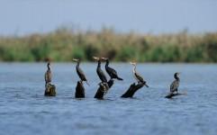 ممنوعیت شکار پرندگان در تالاب های آذربایجان شرقی