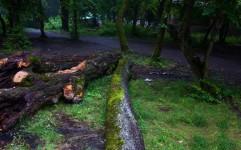 انقراض گونه های حیات وحش سبب نابودی جنگل ها می شود