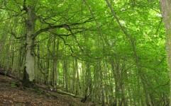 برگزاری کارگاه جنگل های هیرکانی برای ثبت جهانی در استان گلستان