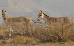 تهدید گونه های جانوری با بی مهری به طبیعت