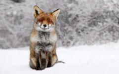مسابقه عکاسی زمستان بیدار در اردبیل برگزار می شود