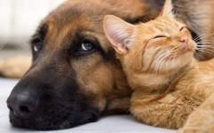 ممنوعیت ورود حیوانات خانگی به تمامی هتل ها و مراکز اقامتی