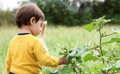 موزه کودک و طبیعت با اهداف آموزشی تاسیس شد