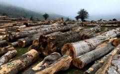 واردات چوب و مساله حفظ جنگل ها در مازندران