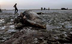 امنیت انسانی در ایران زیر سایه محیط زیست