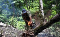 جنگل های شمال کشور به روز سیاه نشسته اند