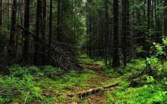 پیامد جبران ناپذیر خشکسالی بر درختان