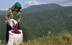 دولت از طرح های تولیدی روستاییان مرزنشین حمایت می کند