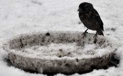 زمستان و لزوم حمایت از حیوانات بی سرپناه