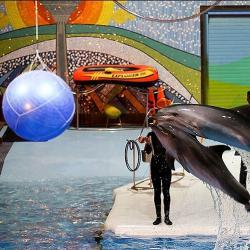 نمایش دلفین های دلفیناریوم برج میلاد
