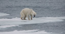 تغییر اقلیم قاتل بی سر و صدای گونه های جانوری
