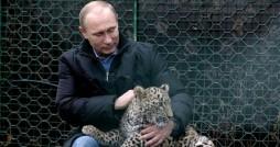 ببر روسی خطر بالقوه برای بقای پلنگ ایرانی