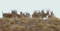 منطقه حفاظت شده طارُم، نگین طبیعتِ قزوین