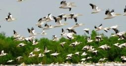 تالاب های گیلان میزبان افزون بر 200 هزار پرنده مهاجر
