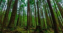 کاهش سرانه فضای سبز کشور فاجعه آور است