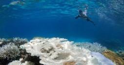 امواج گرمایی اقیانوس ها را داغ کرده است
