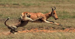 گسترش طاعون و تلفات حیات وحش در منطقه شکار ممنوع طالقان