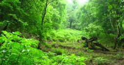 ضرورت مدیریت پوشش گیاهی در محوطه میراث جهانی پاسارگاد